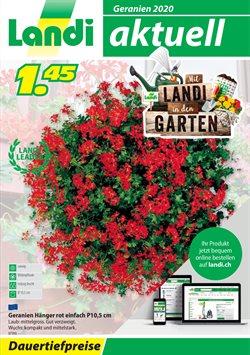 Landi Katalog ( Mehr als 30 Tage )